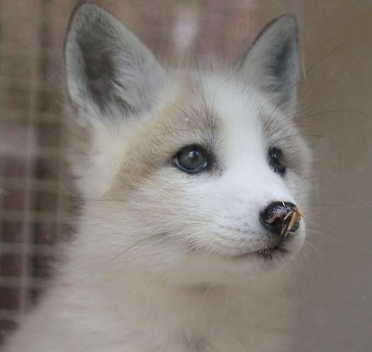 リアルファーの為に動物達が殺されることについて何を思いますか?