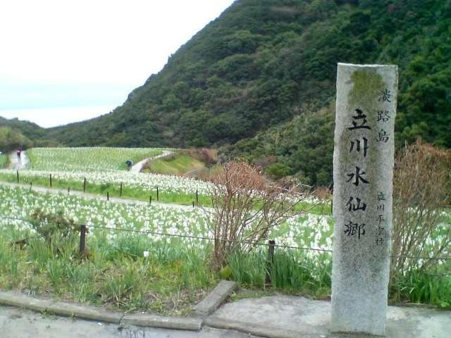 立川水仙郷 - Wikipedia