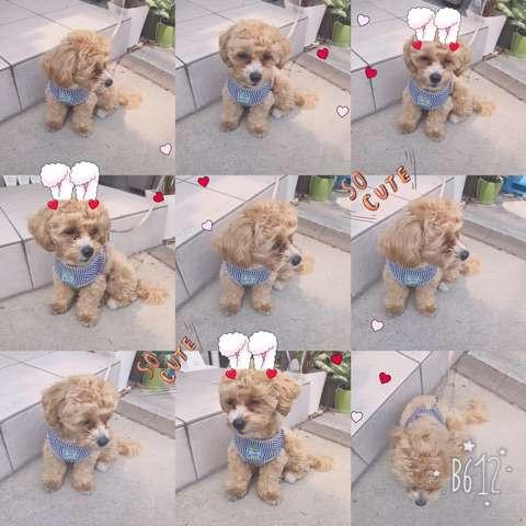 杉浦太陽、愛犬の誕生日ケーキ写真で波紋…辻希美がブログで釈明し「確信犯」の声