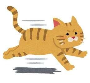 ネコによる糞尿被害の効果的な防止策を発見 行動原理を利用したヒトとネコの共存可能な方法へ
