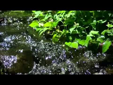 """【癒し系】自然音  小鳥たちと緑のせせらぎ """"Babbling Brook with Birds sound"""" - YouTube"""