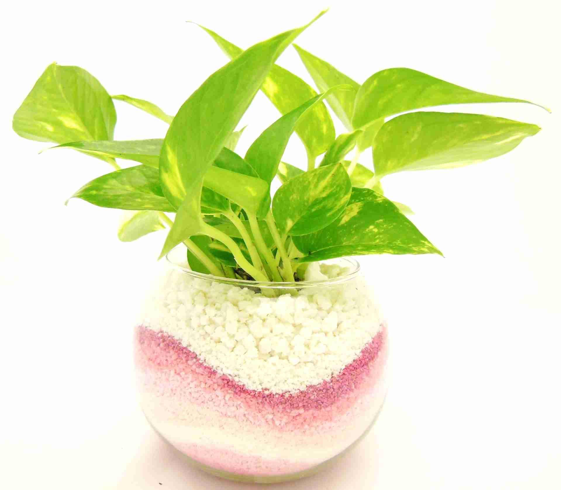 観葉植物を育てている方