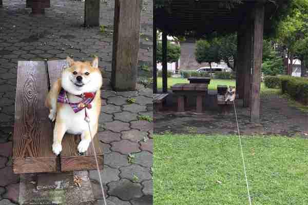「やだ!帰りたくない!」お気に入りの公園で、帰宅を全力で拒否する柴犬