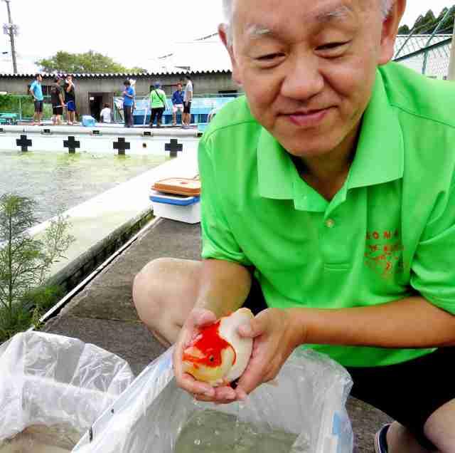 金魚、生き延びていた 熊本地震以来、プールから救出