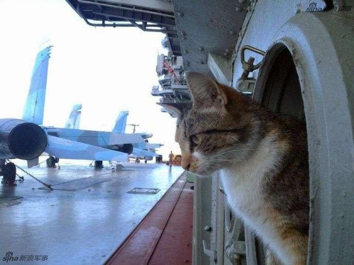 ロシア海軍の軍艦は伝統でネコを飼う! : 軍事・ミリタリー速報☆彡