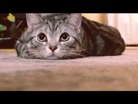 #猫バンバン PROJECT MOVIE by NISSAN #KnockKnockCats - YouTube
