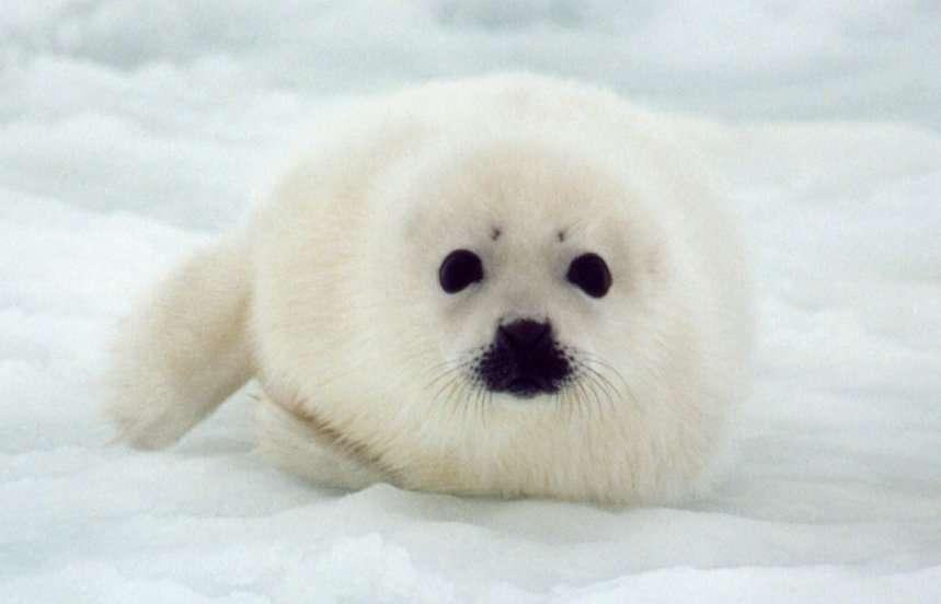 眉毛のある動物の写真