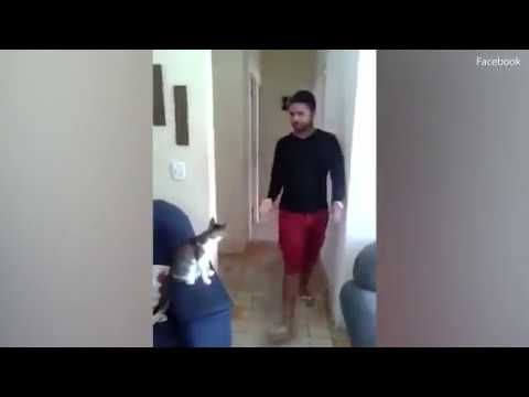 """Man strolls over to very cool cat who high fives AND fist bumps him"" - YouTube"