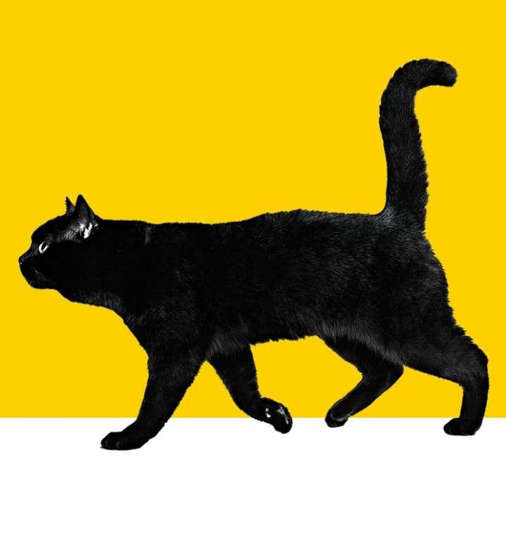黒猫のイメージは?