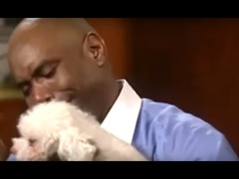 Judge Judy Lets Dog Find Its REAL Owner Inside Court - YouTube