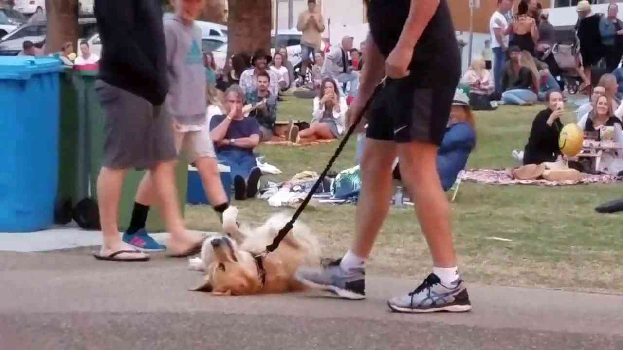 Dog refuse to leave the park. - YouTube