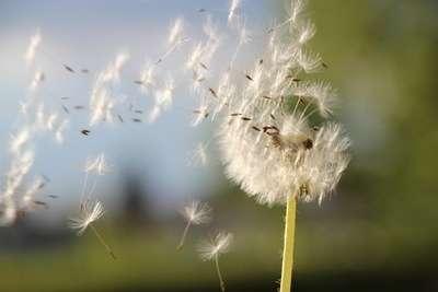 風を感じる画像