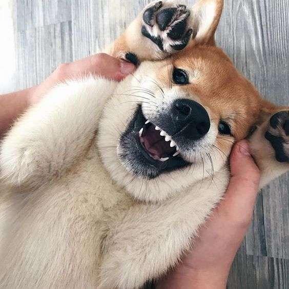 【画像】仰向けの猫・犬