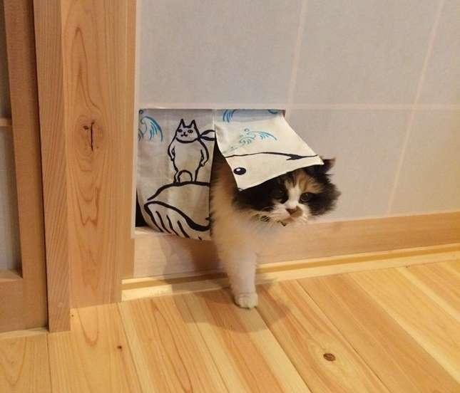「エサを横取りする太っちょ猫のために…秘密兵器を導入した」