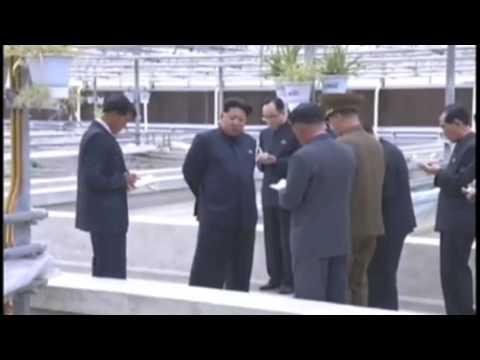 金正恩スッポン工場で激怒 - YouTube