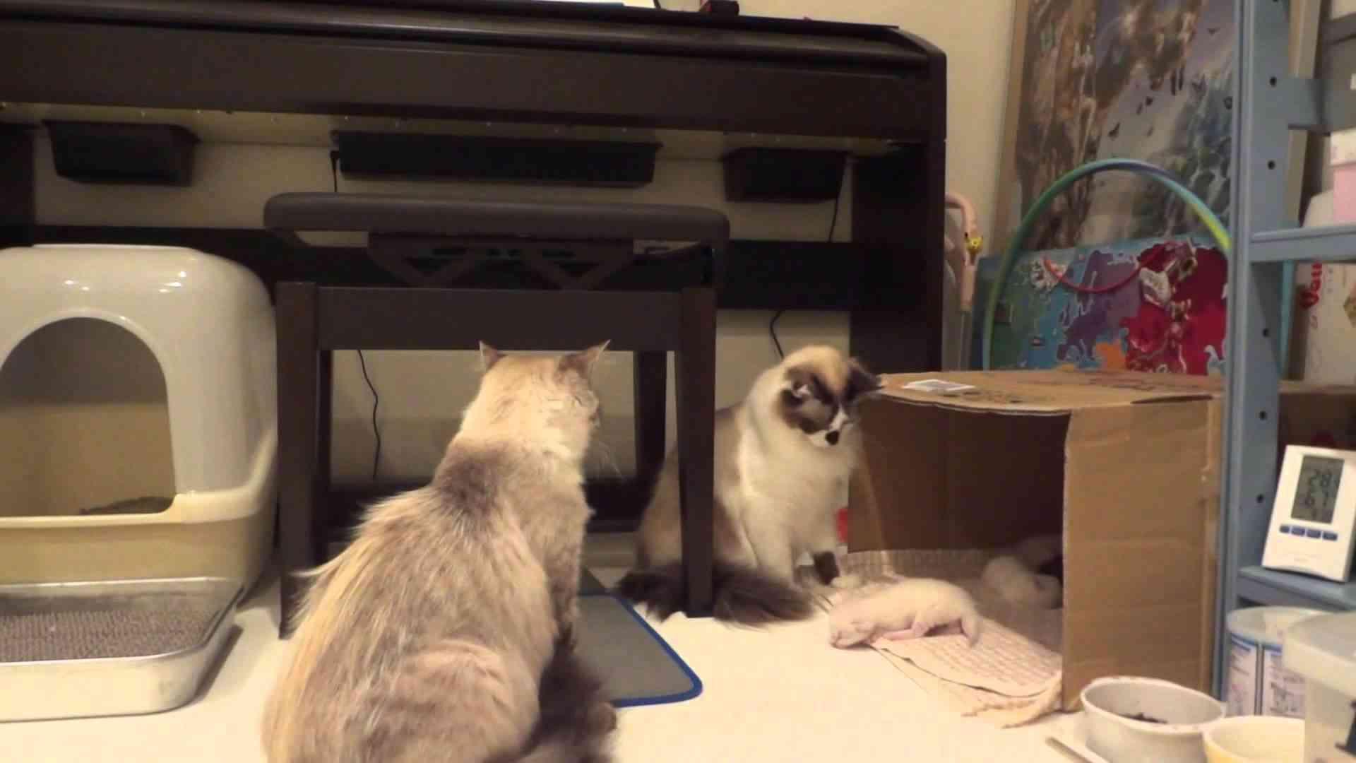 他の猫が子猫をいじくっていたら、母猫が・・・ついに一撃。an angry mother cat attacks brutally - YouTube
