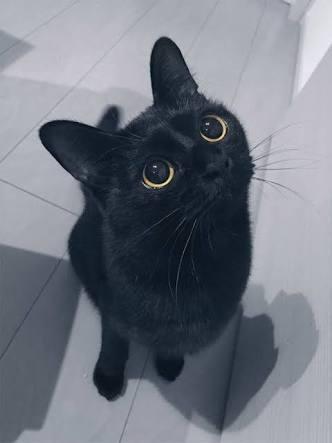 飼い猫に関する総合トピpart2