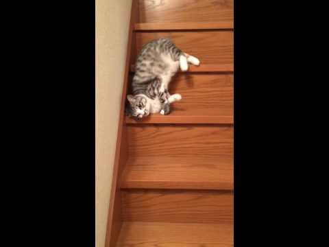 流れるように落ちていく猫(流動体) - YouTube