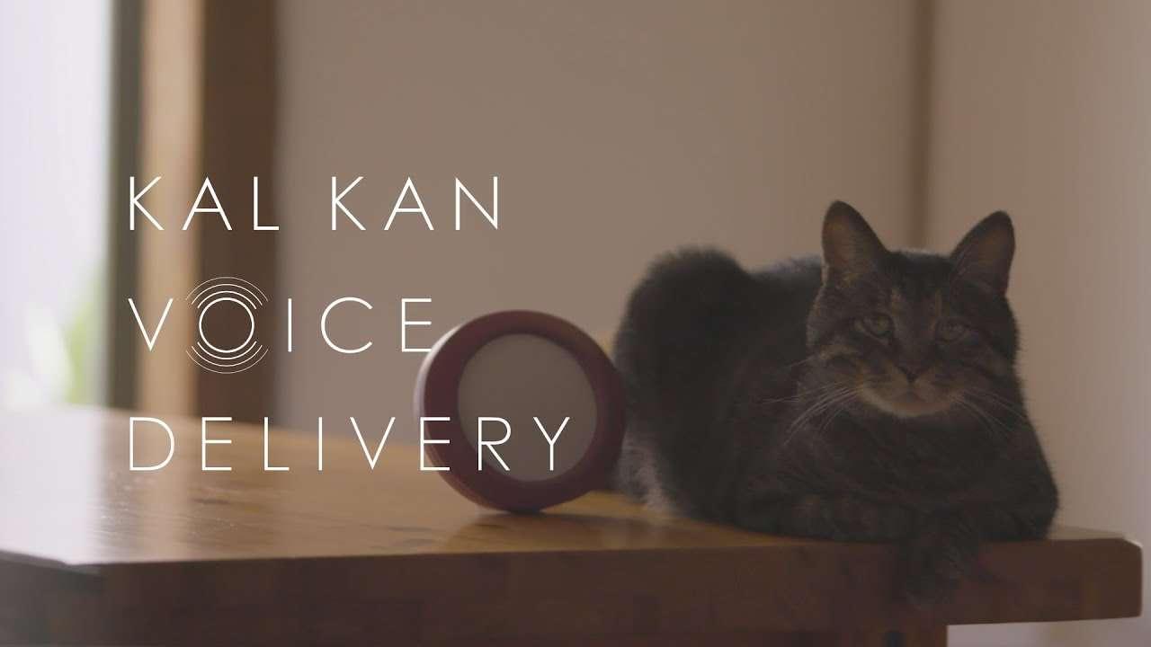 ネコは昔いっしょに過ごした飼い主の声を覚えているのか?  - KAL KAN VOICE DELIVERY - YouTube