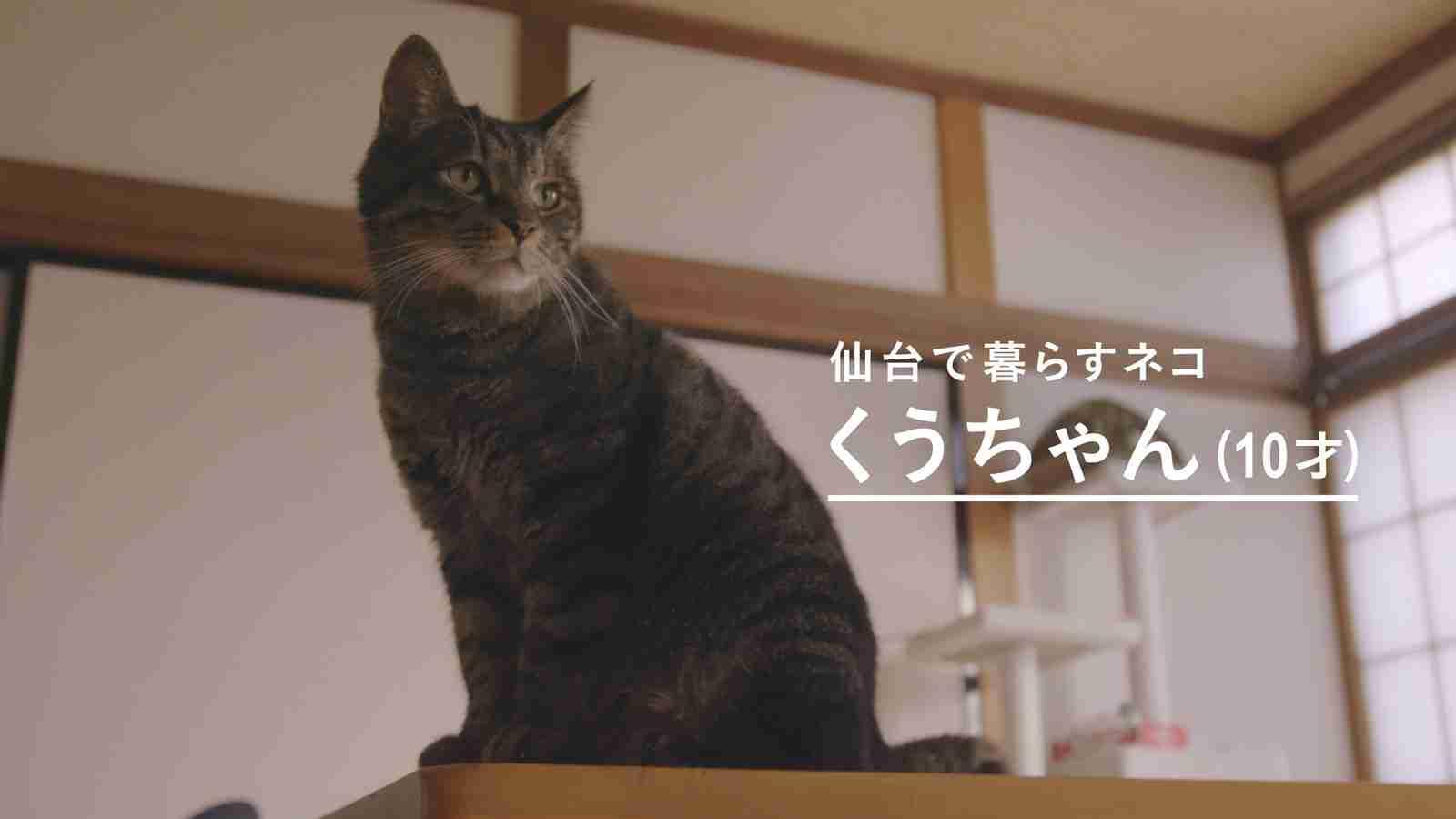 2年ぶりに「飼い主の声」を聞いたネコの表情に胸が熱くなる