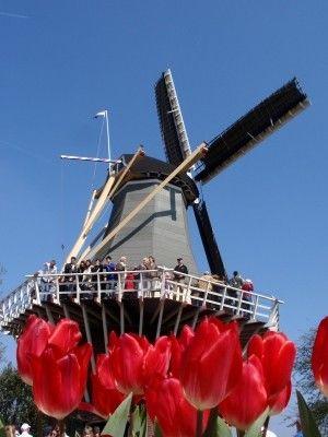 オランダの農業、スマートアグリがすごい - NAVER まとめ