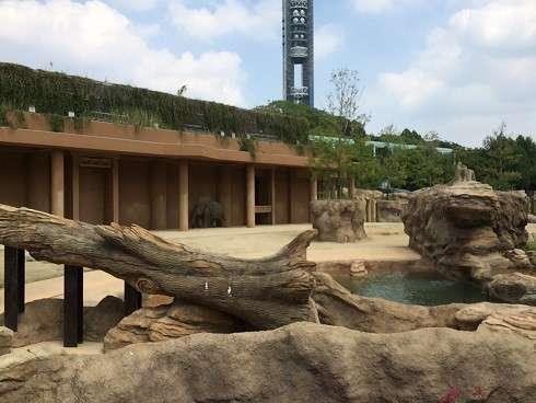 好物のバナナ最期まで…人気投票1位のゾウ「はな子」天国へ、46歳 福岡市動物園