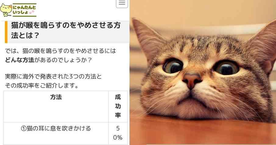 【炎上】猫メディア「猫の喉のゴロゴロ音がうるさい!やめさせる方法はあるの?」←はああああ? | netgeek