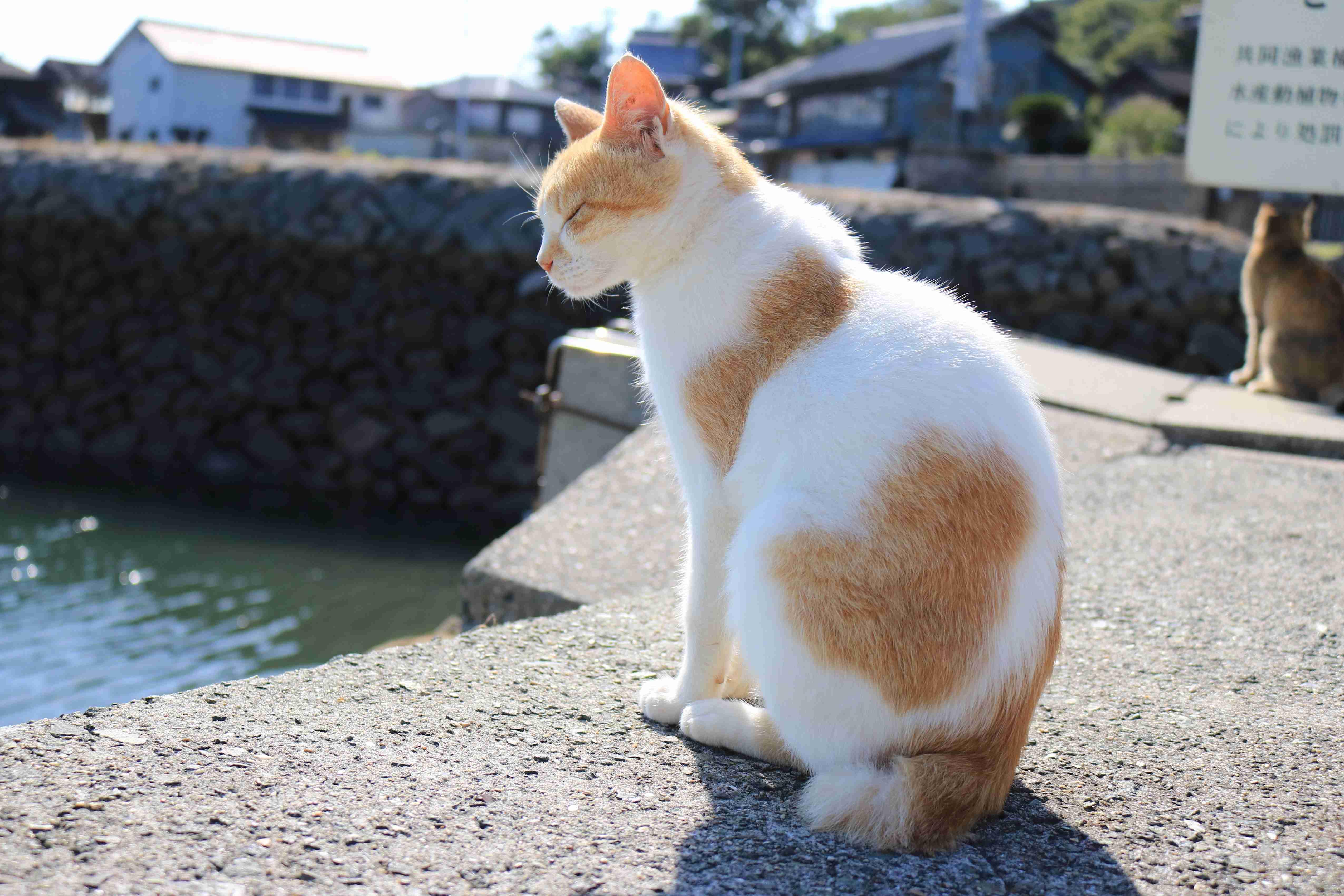 キャットフード送付のお願い|猫の島 青島物語