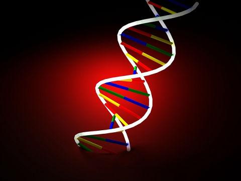 遺伝の「優性」「劣性」使うのやめます、学会が用語改訂