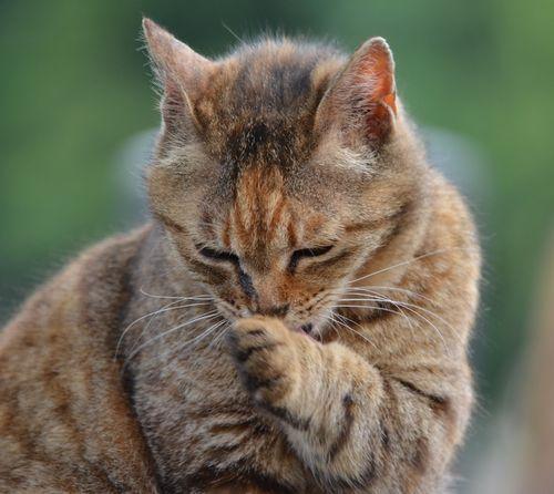マダニ感染症、猫からうつる? 野良猫にかまれた女性が感染し死亡 (sippo) - Yahoo!ニュース