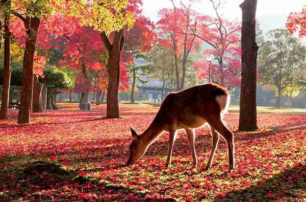 秋にやりたいこと~