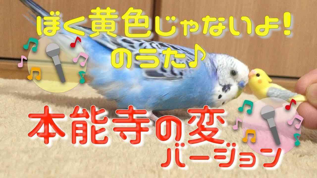 """めちゃくちゃ喋るインコのピピによる「本能寺の変」の替え歌♪ / Budgie sing a parody of a song """"The Honnoji Incident"""" [#052] - YouTube"""