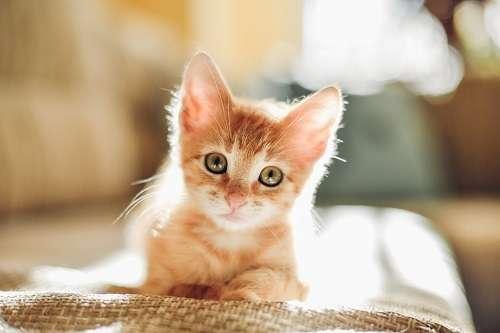 ネコは宇宙人が送り込んだ人類を監視するためのスパイだった! 専門家「ゴロゴロすら科学的に解明できぬ」 - エキサイトニュース