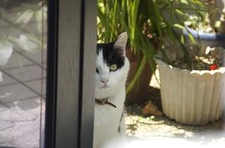 「犬は人につき、猫は家につく」っていうけど本当なの? | マイナビニュース