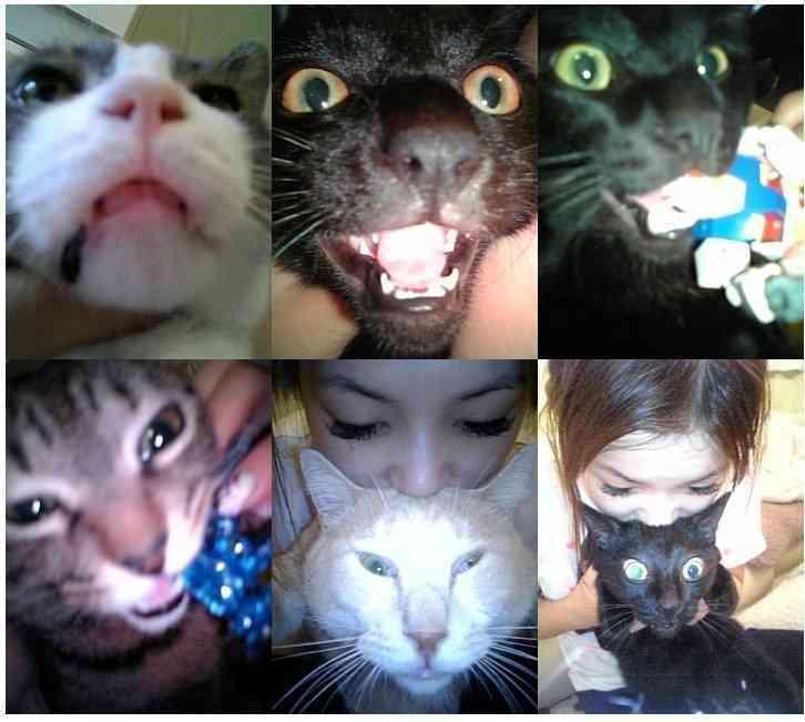 中川翔子の愛猫マミタスが急死