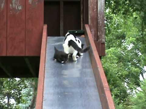 Kittens on a Slide - YouTube
