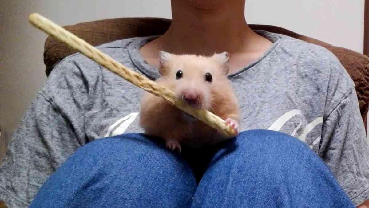 【画像】ハムスターを愛でるトピ