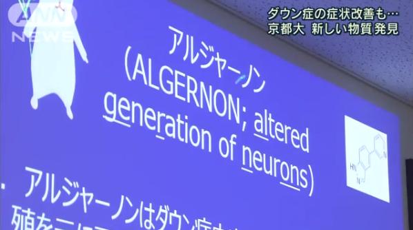 京大(京都大)が化合物「アルジャーノン」を発見、ダウン症のマウスを改善し話題に…名前の由来は小説「アルジャーノンに花束を」から?ネット上の反応まとめ | ENDIA[エンディア]