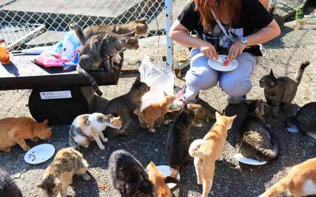 拡散希望! 「猫のご飯が足りません」猫の楽園『青島』が寄付を呼びかけ   grape [グレイプ]