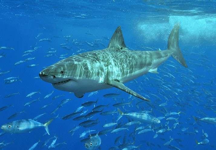 人命よりクジラ命…「反捕鯨原理主義」が招いたサメ被害の皮肉