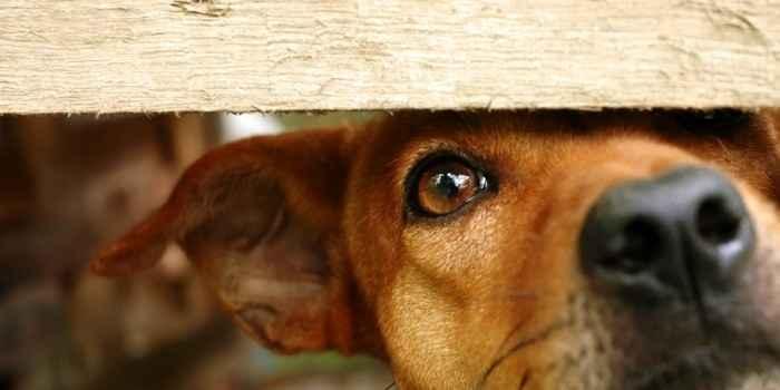 """スペインの町で犬や猫に""""人権""""を与える条例が可決、殺処分も禁止へ"""