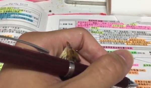 勉強中のペンを握る手にもぐって和む「ウズラ」に胸キュン!