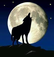 あなたの周りの一匹狼