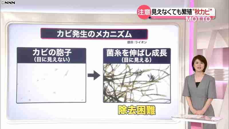 """今年は""""秋カビ""""に要注意…夏の長雨で増殖(日本テレビ系(NNN)) - Yahoo!ニュース"""