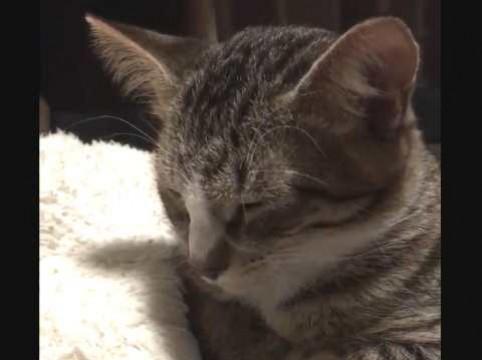 疲れちゃった猫がうと、うと、コテンッ - 動画 - Yahoo!映像トピックス