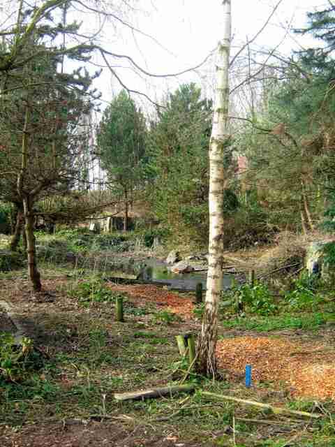 日本庭園、海外でほったらかし…草木伸び放題・灯籠は崩壊