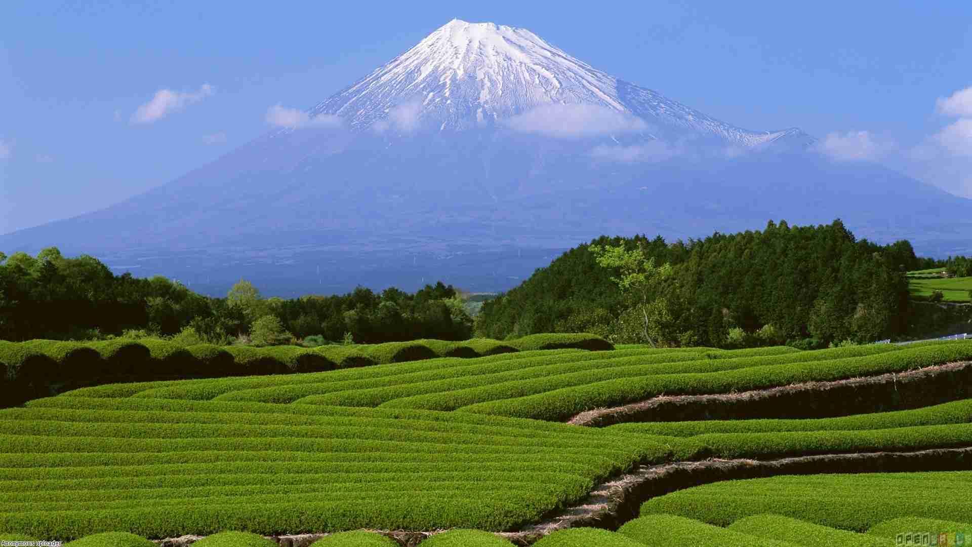 日本が好きですか?