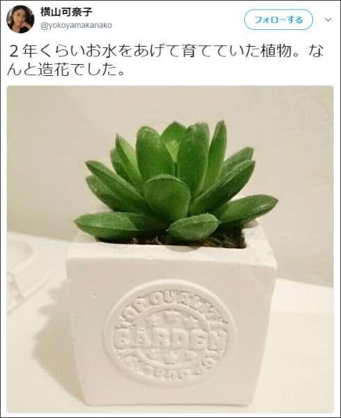 タレントの横山可奈子が造花に2年間、水をあげて育てていたとツイート  あげた水はどこへ行った?
