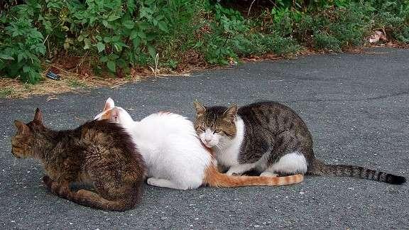 オーストラリアで200万匹の野良猫を殺処分予定   ANIMALive
