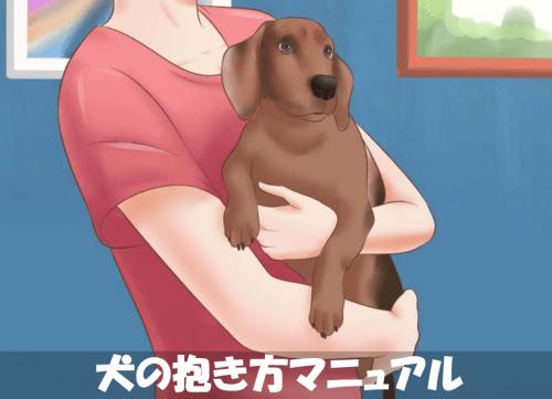 【写真でわかる】小型犬・中型犬・大型犬の抱き方マニュアル   愛犬ファミリア